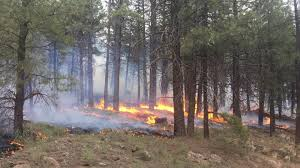 Wildfire Northern Colorado by Wildfire
