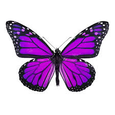 the butterfly is a symbol for fibromyalgia just the lightest