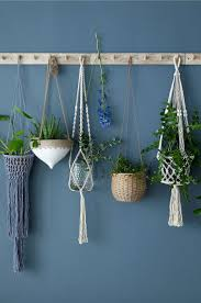 Best Plants For Bedrooms Best 25 Dorm Plants Ideas On Pinterest Cozy Dorm Room Dorm