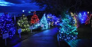 dundarave festival of lights offers outdoor display of