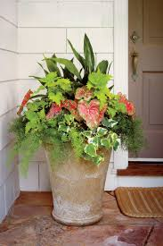 high heat plants heat tolerant container gardens for sweltering summers southern
