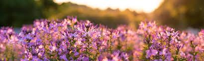 Blumen Bade Team