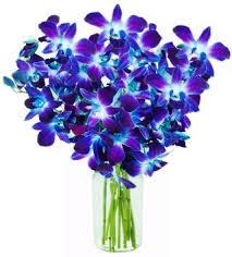 fresh cut flowers fresh cut flowers blue dendrobium orchids bom