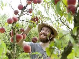 Backyard Fruit Trees Benicia Backyard Orcharding Easy And Enjoyable