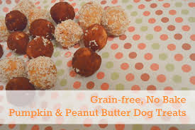 recipe for dog treats grain free no bake peanut butter pumpkin dog treats kol s notes