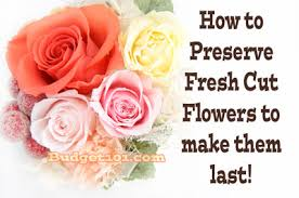 Preserve Flowers How To Preserve Your Fresh Cut Flowers Budget101 Com