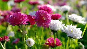 world beautiful flowers wallpaper group 0