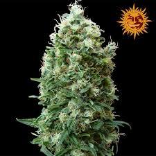 Flower Seeds Online - top 25 best seeds online ideas on pinterest buy seeds buy weed