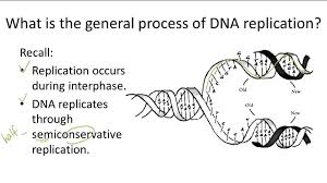 dna replication advanced ck 12 foundation