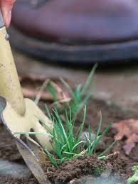 maintain your garden using pre emergent weed control front yard