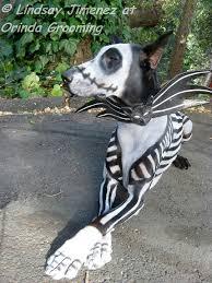 Jack Skellington Halloween Costume Dress Dog Latte Halloween Creative