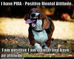 Funny Encouraging Memes - funny pet photos on twitter funny dog positive mental