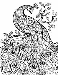 100 jungle coloring page rainforest plants coloring pages
