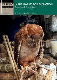 in the market for extinction eastern and central java pdf