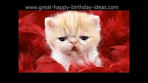 kitty cat birthday song to you have a great birthday youtube