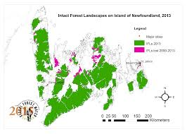 Interactive Map Global Forest Watch by Intact Forest Landscapes In Newfoundland Global Forest Watch Canada