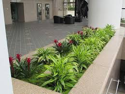 Plants For Office Guaranteed Maintenance U2013 Plants For Office And Lobby U2013 Los Angeles