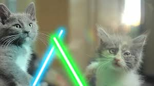 jedi kittens youtube