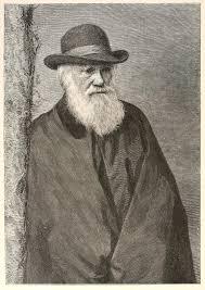file charles darwin portrait 1881 standing sketch png wikimedia