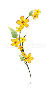 stem flowers yellow flower on a stem with green leaves on white background