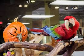 halloween spirit store locations liberty science center the animals at lsc are getting into the