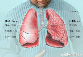 Skeletal Picture Of Foot Lungs Picture Image On Medicinenet Com