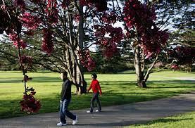 Golden Gate Botanical Garden S F Proposes Botanical Garden Entrance Fee Sfgate