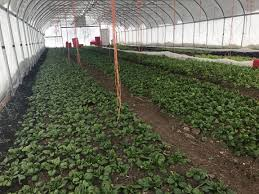 How To Get Usda Certified Cortland County Beginning Farmer Sees Success With High Tunnels