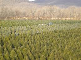 a white christmas tree farm christmas lights decoration