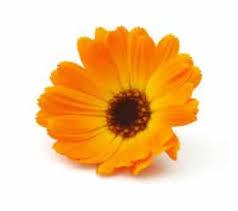 calendula flowers how to make calendula at home 12 uses and remedies