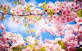 a spring cleaning checklist marta perrone