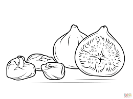 fig fruit coloring page free printable coloring pages