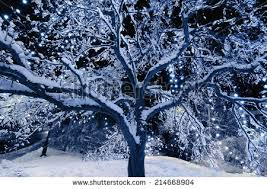 christmas lights to hang on outside tree snow covered tree outside christmas lights stock photo royalty free