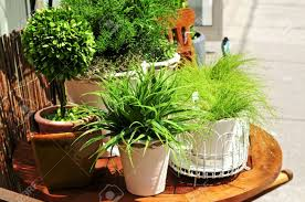 Potted Patio Trees by Pot Plants For Patios 64 Stunning Decor With Wonderful Potted