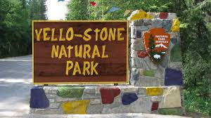 yellowstone national park concerned about competing u0027yello stone