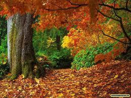 cute autumn backgrounds desktop backgrounds fall wallpaper cave
