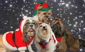 dog christmas christmas puppy names small dog place