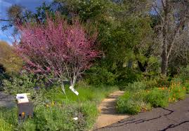 california native plants for sale water wise landscape workshops presentations and classes uc