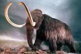 rusos coreanos preparados intentar clonar mamut