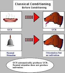 best 25 classical conditioning psychology ideas on pinterest