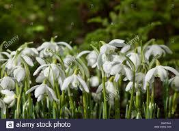 common garden flowers white