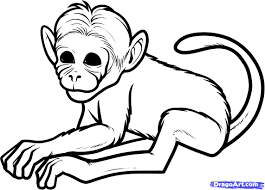 spider monkey drawing
