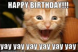 Yay Meme - 20 adorbs happy birthday cat memes sayingimages com