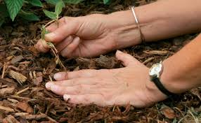 How To Cut Weeds In Backyard Six Tips For Effective Weed Control Fine Gardening