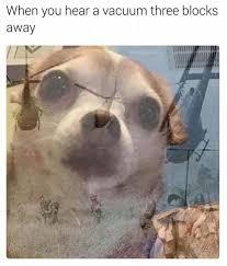 Funny Chihuahua Memes - memetheusrr hashtag on twitter