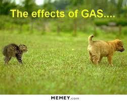 Funny Puppy Memes - puppy fart memey com