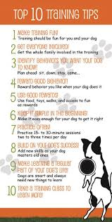 best 25 therapy dog training ideas on pinterest dog having