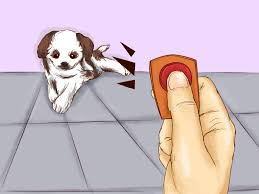 how to teach your pet not to be scared of the vacuum cleaner