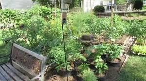 bird feeders u0026 bird baths to protect your vegetable garden