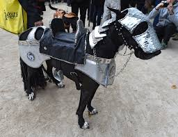 dog costumes spirit halloween halloween 2015 pet costume ideas at new york u0027s tompkins square